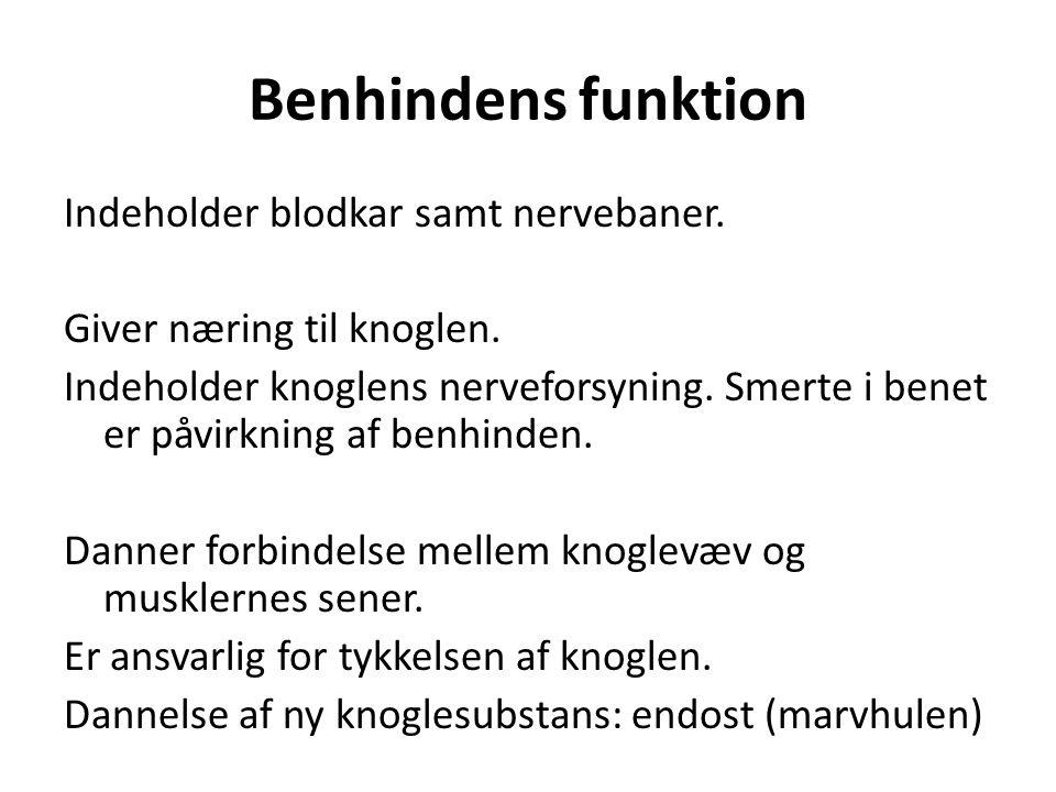 Benhindens funktion