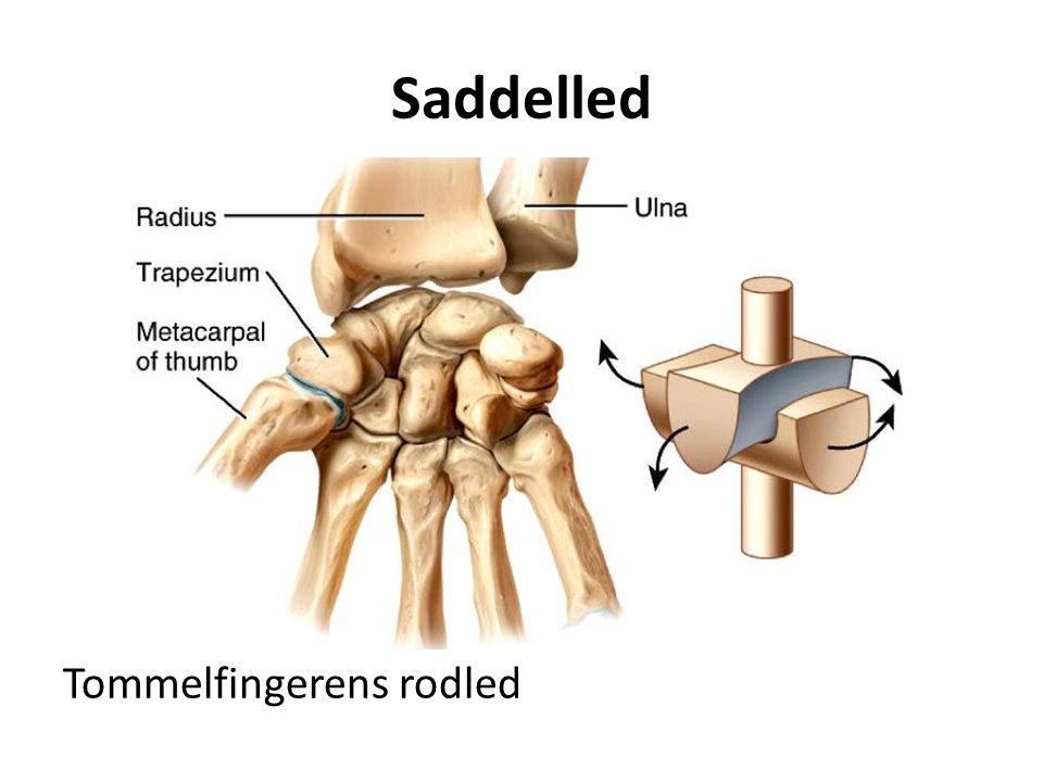 Saddelled