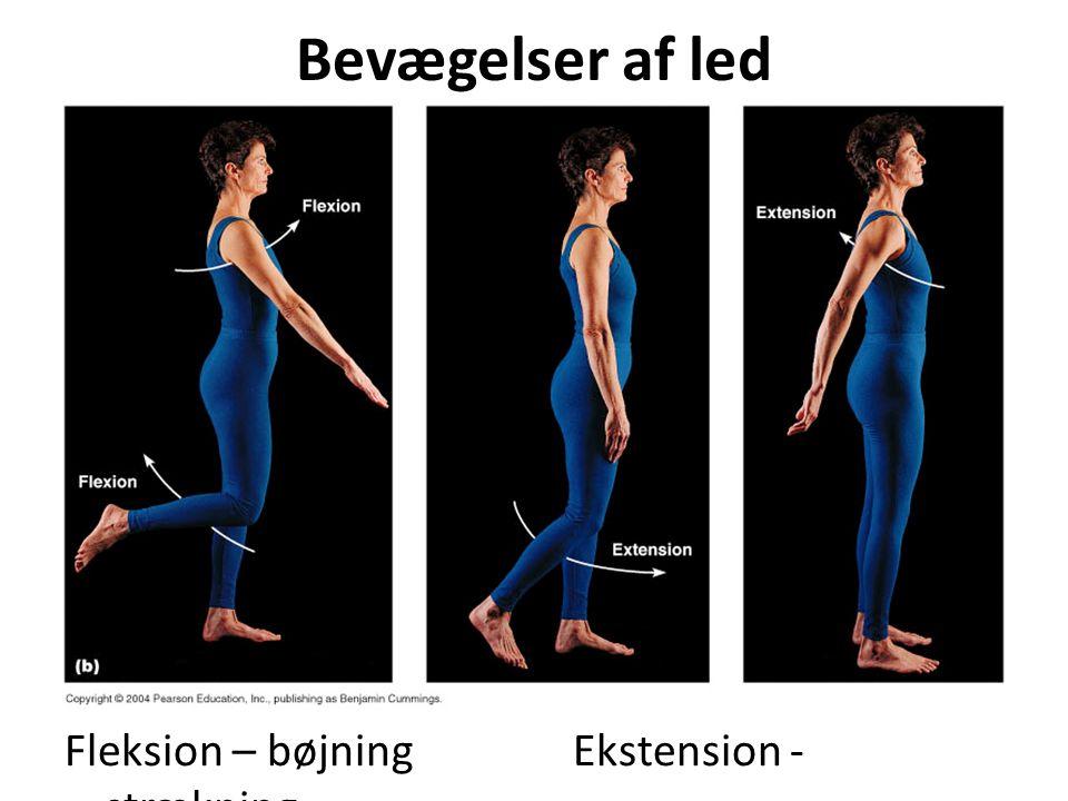 Bevægelser af led Fleksion – bøjning Ekstension - strækning