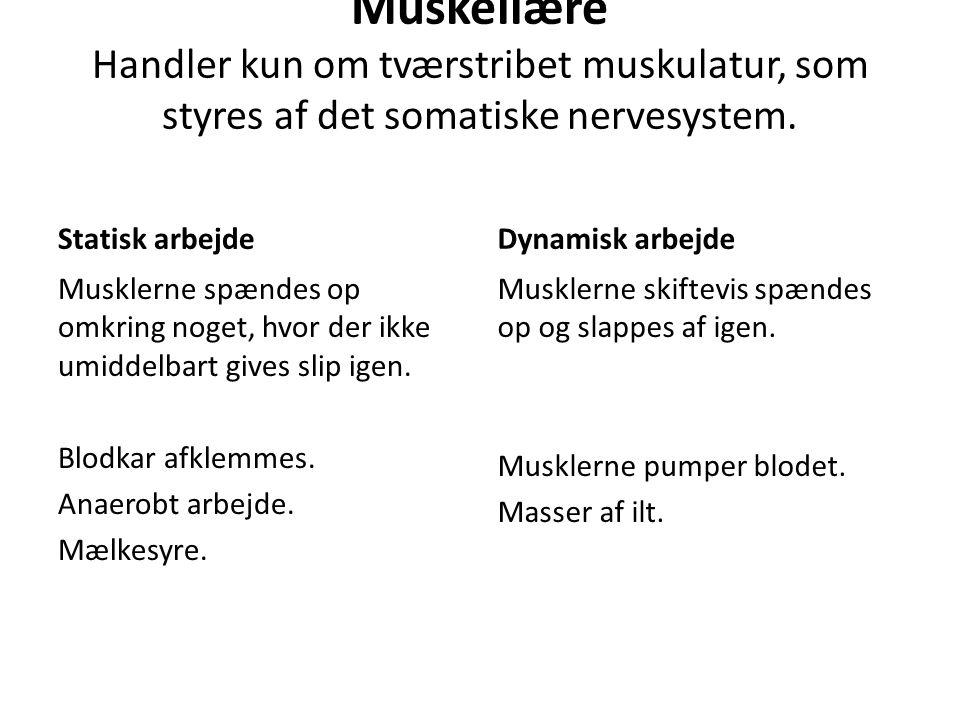 Muskellære Handler kun om tværstribet muskulatur, som styres af det somatiske nervesystem.