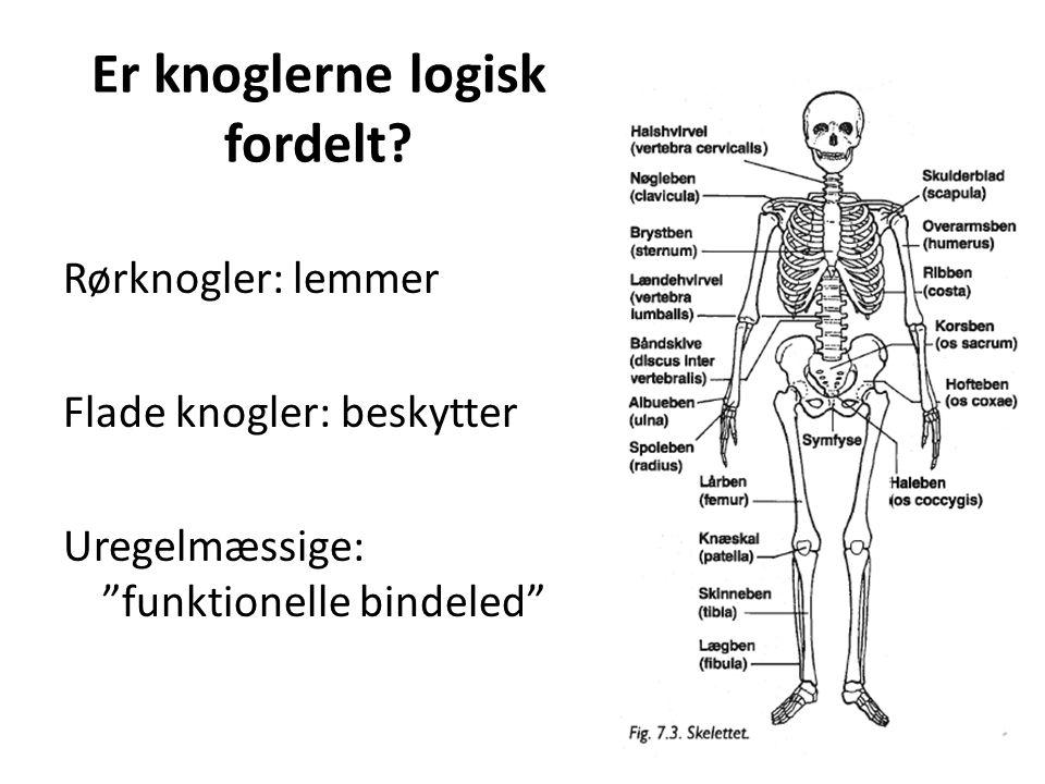 Er knoglerne logisk fordelt