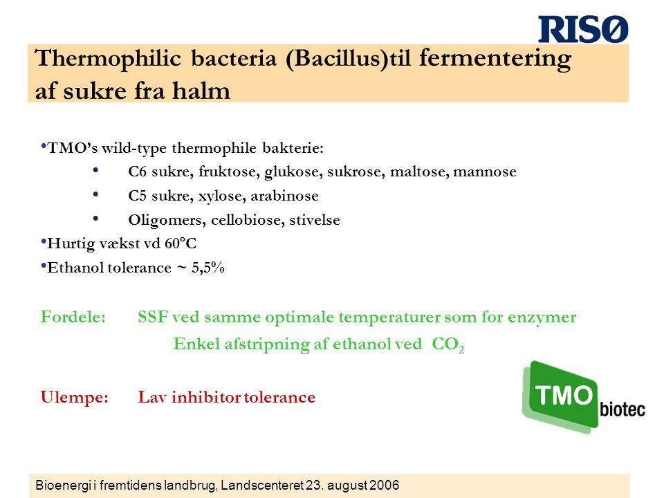 Thermophilic bacteria (Bacillus)til fermentering af sukre fra halm