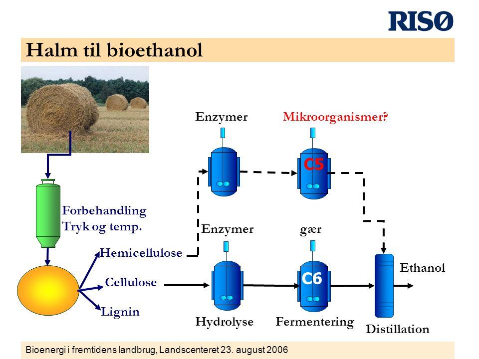 Halm til bioethanol C5 C6 Enzymer Mikroorganismer Forbehandling