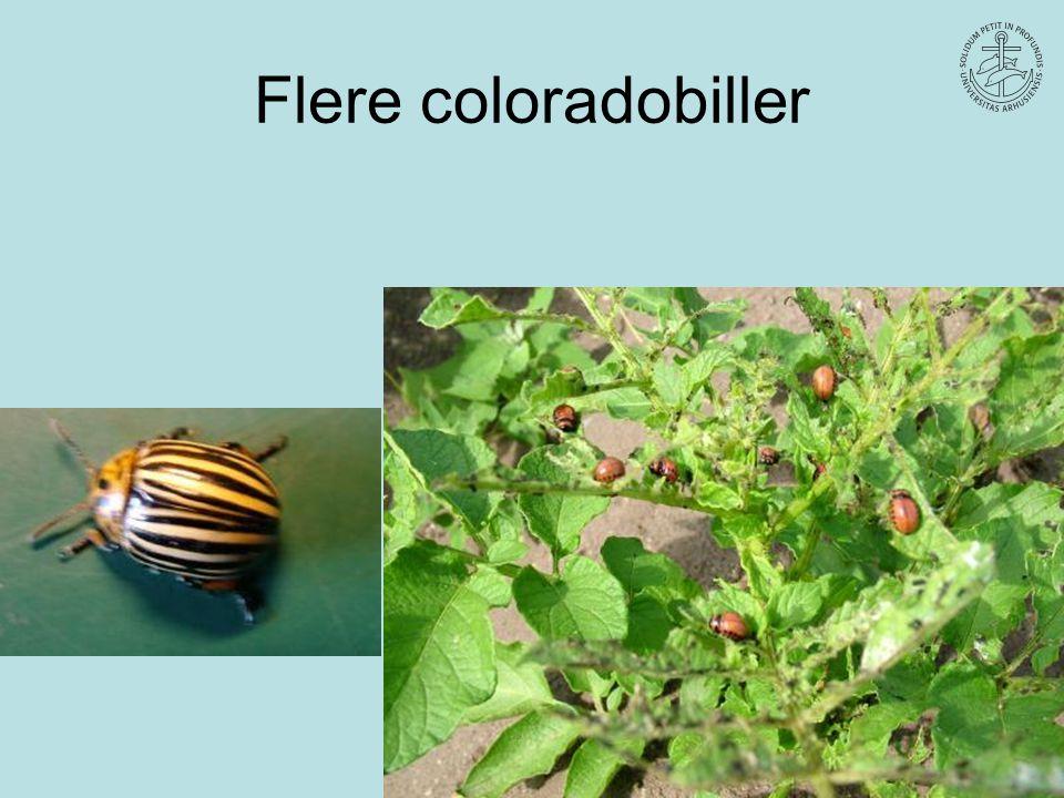 Flere coloradobiller