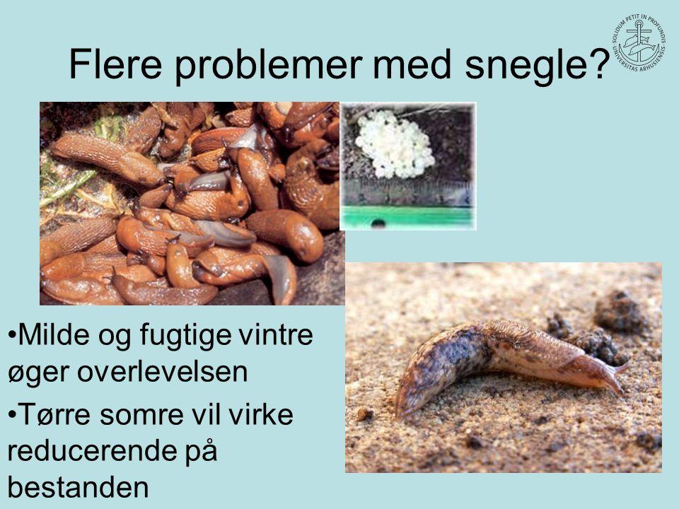 Flere problemer med snegle