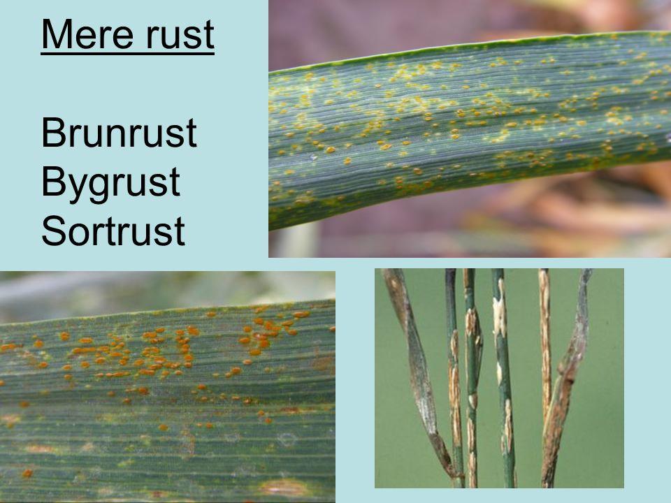 Mere rust Brunrust Bygrust Sortrust