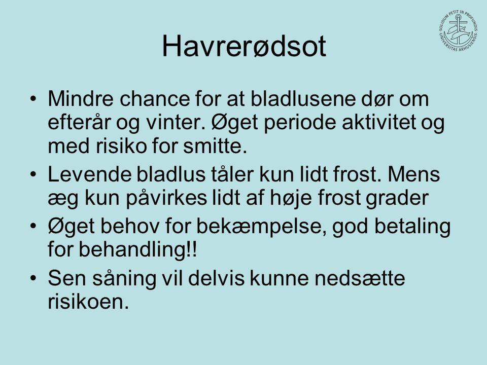 Havrerødsot Mindre chance for at bladlusene dør om efterår og vinter. Øget periode aktivitet og med risiko for smitte.