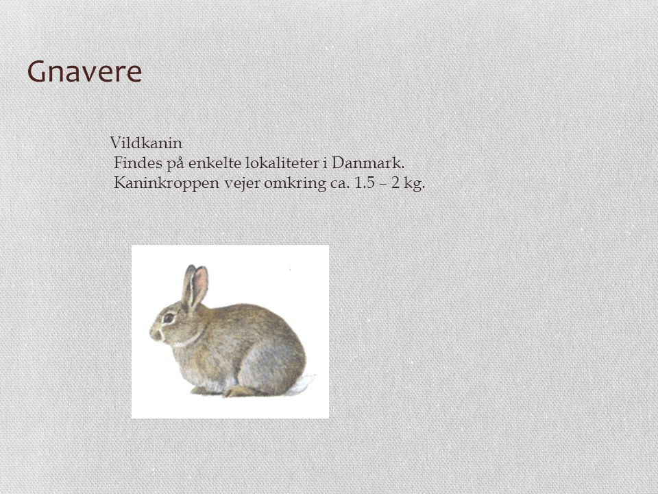 Gnavere Vildkanin Findes på enkelte lokaliteter i Danmark.