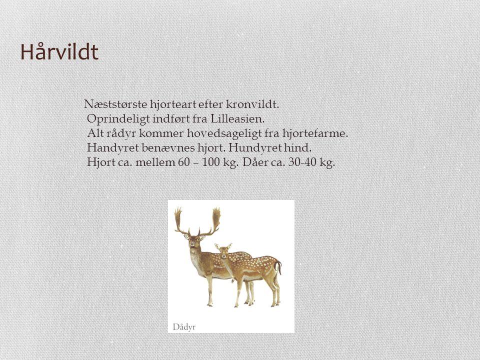Hårvildt Næststørste hjorteart efter kronvildt.
