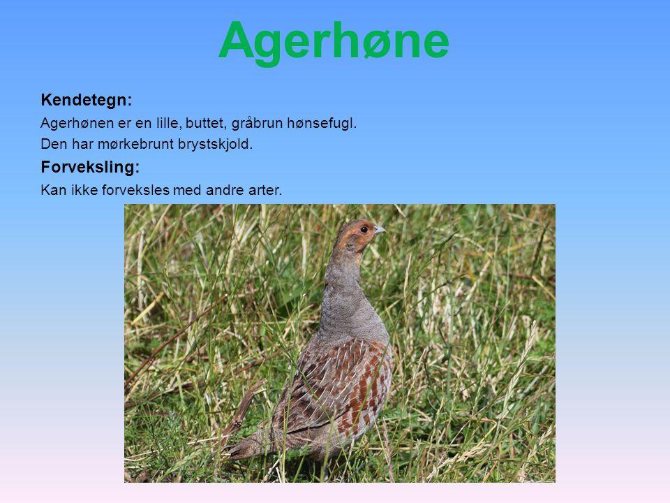 Agerhøne Kendetegn: Forveksling: