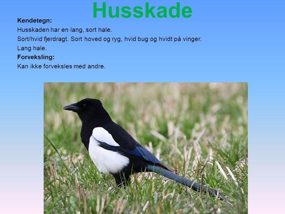 Husskade Kendetegn: Husskaden har en lang, sort hale.