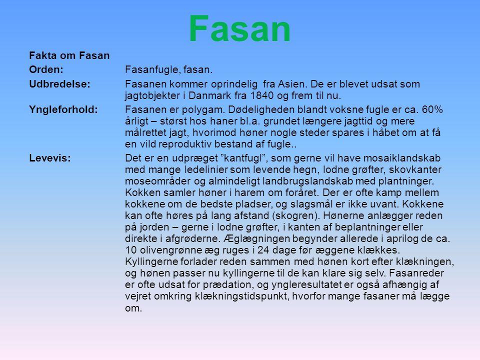 Fasan Fakta om Fasan Orden: Fasanfugle, fasan.