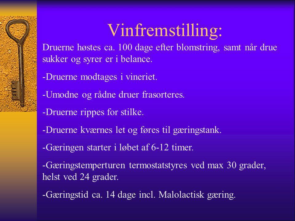 Vinfremstilling: Druerne høstes ca. 100 dage efter blomstring, samt når drue sukker og syrer er i belance.