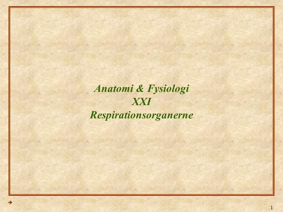Anatomi & Fysiologi XXI Respirationsorganerne