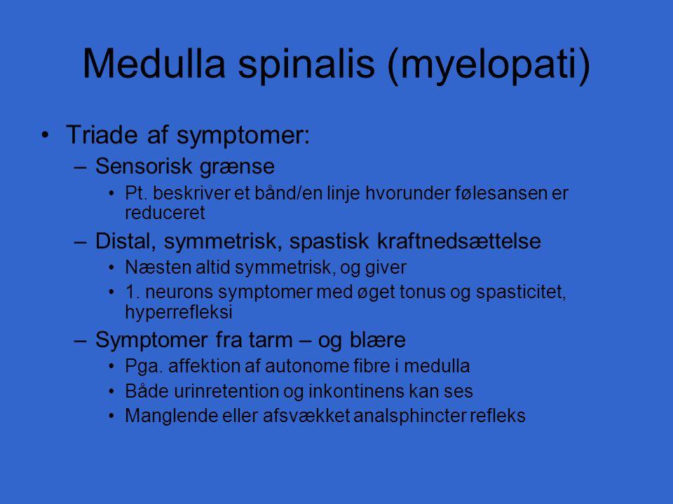 Medulla spinalis (myelopati)