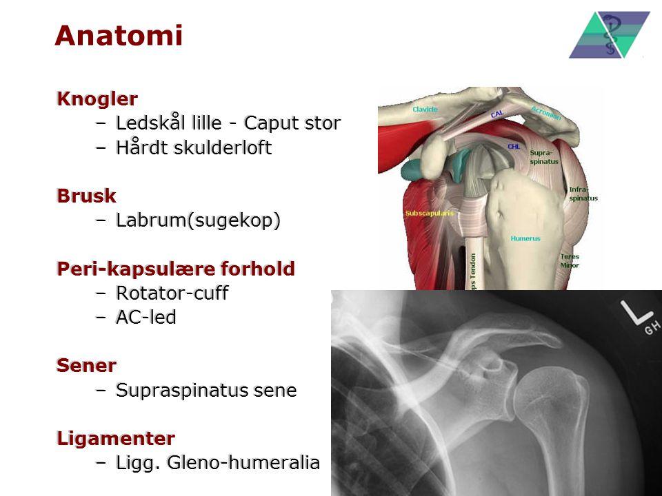 Anatomi Knogler Ledskål lille - Caput stor Hårdt skulderloft Brusk