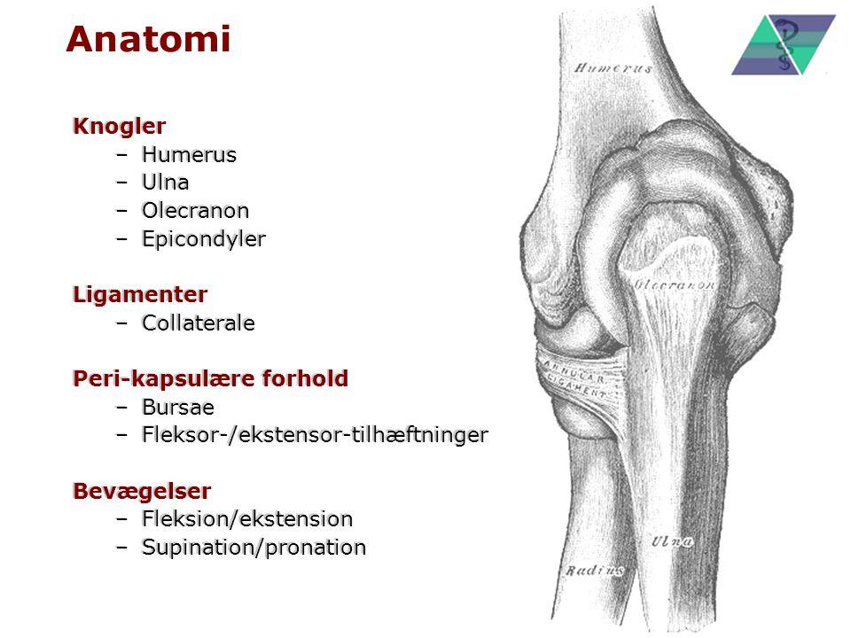 Anatomi Knogler Humerus Ulna Olecranon Epicondyler Ligamenter