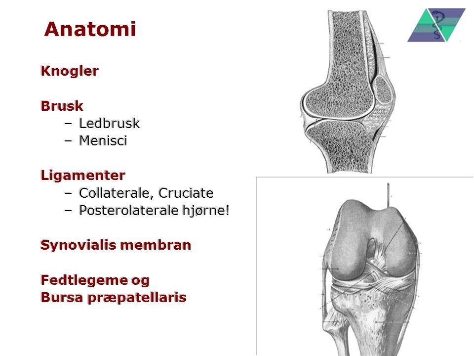 Anatomi Knogler Brusk Ledbrusk Menisci Ligamenter