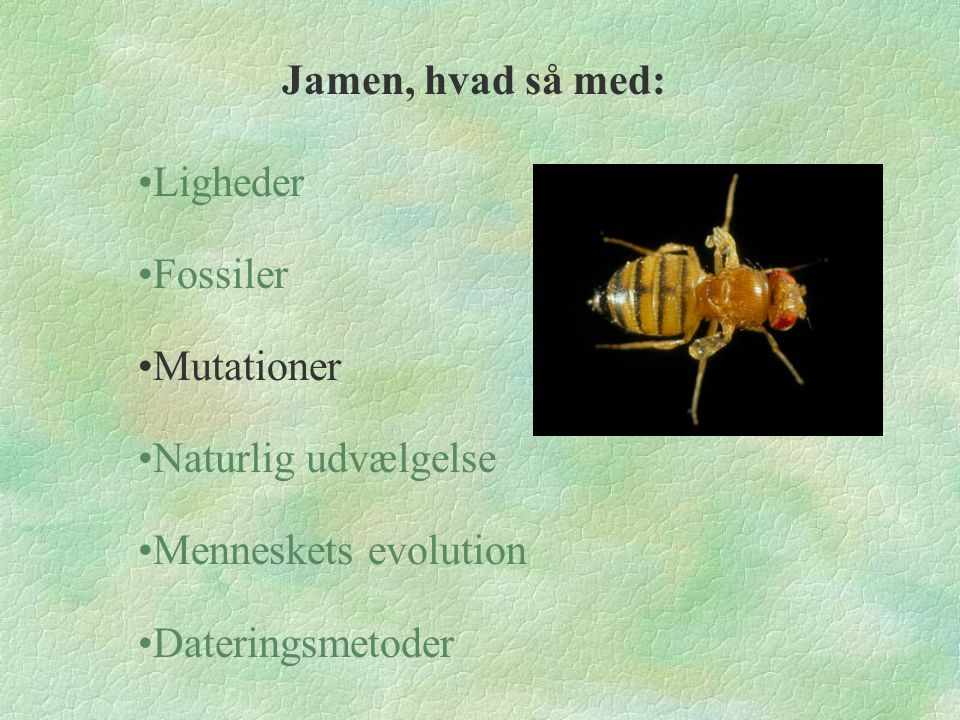 Jamen, hvad så med: Ligheder. Fossiler. Mutationer.