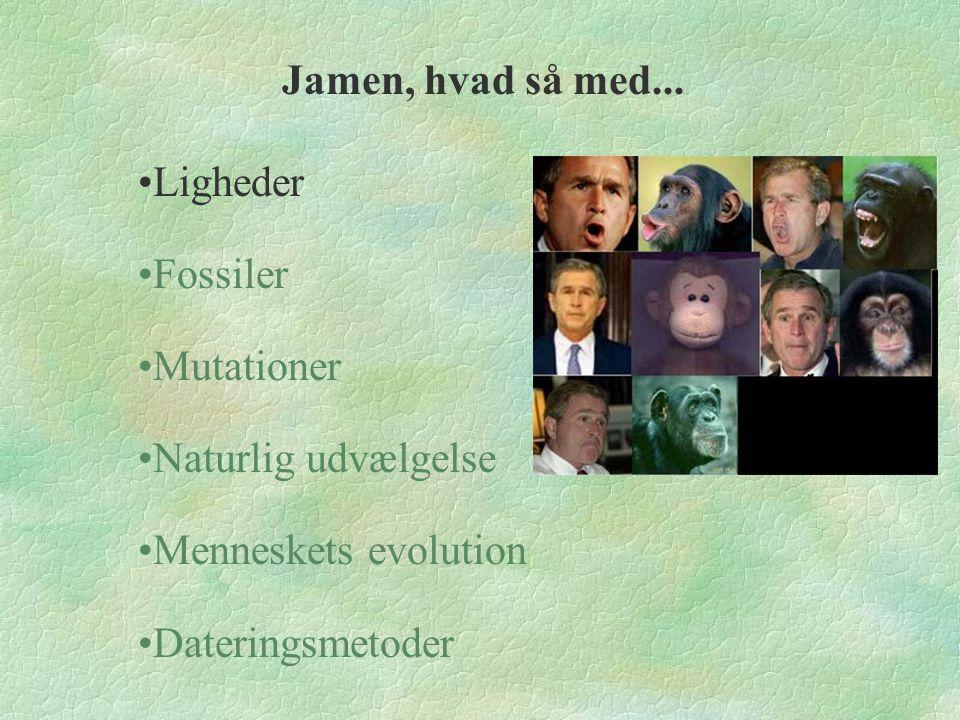 Jamen, hvad så med... Ligheder. Fossiler. Mutationer. Naturlig udvælgelse. Menneskets evolution.