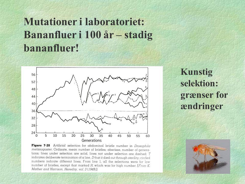 Mutationer i laboratoriet: Bananfluer i 100 år – stadig bananfluer!