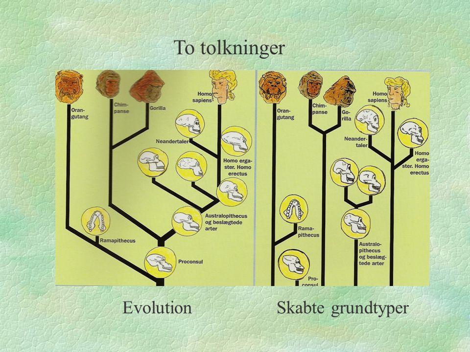 To tolkninger Evolution Skabte grundtyper