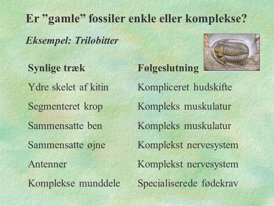 Er gamle fossiler enkle eller komplekse