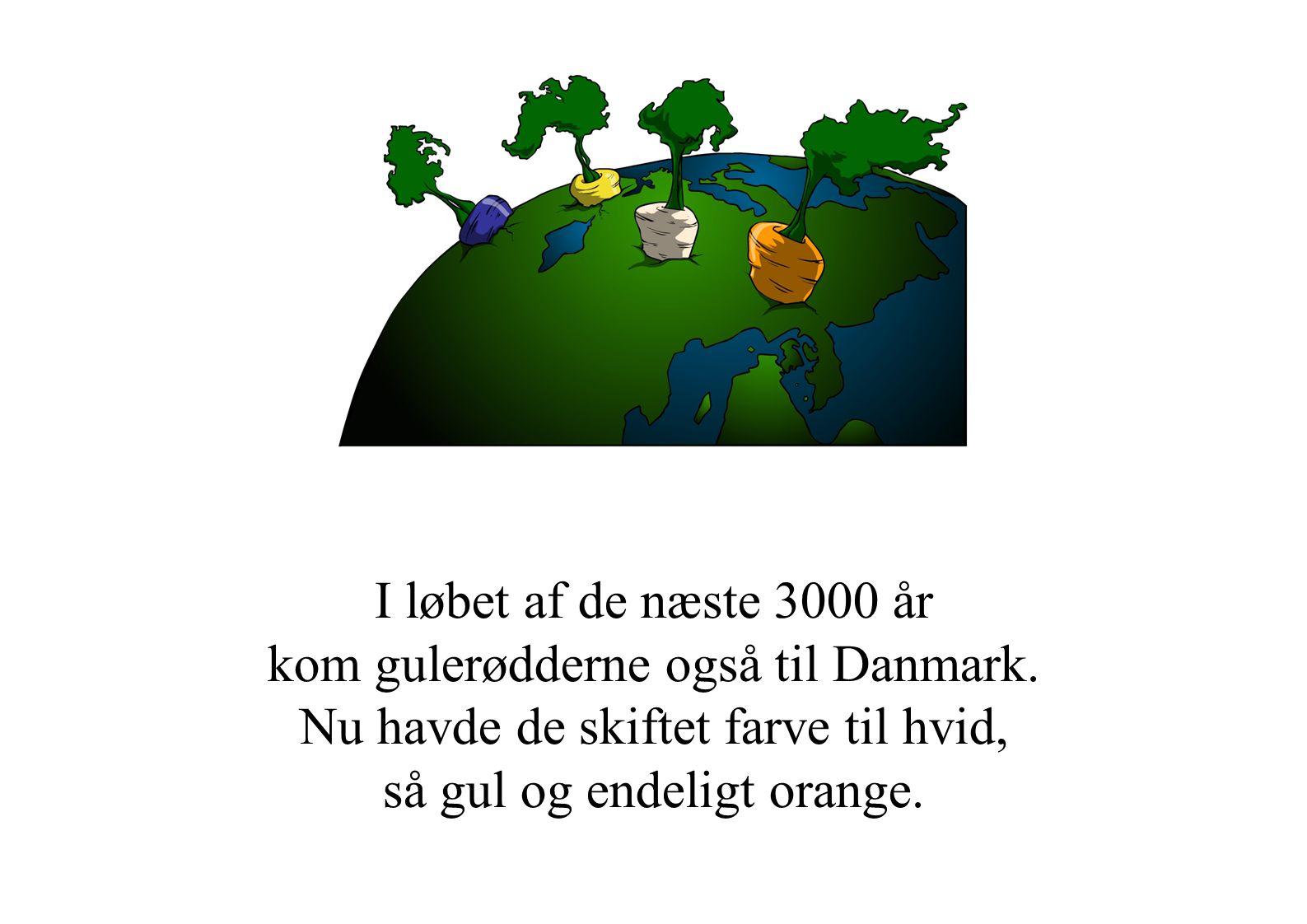I løbet af de næste 3000 år kom gulerødderne også til Danmark