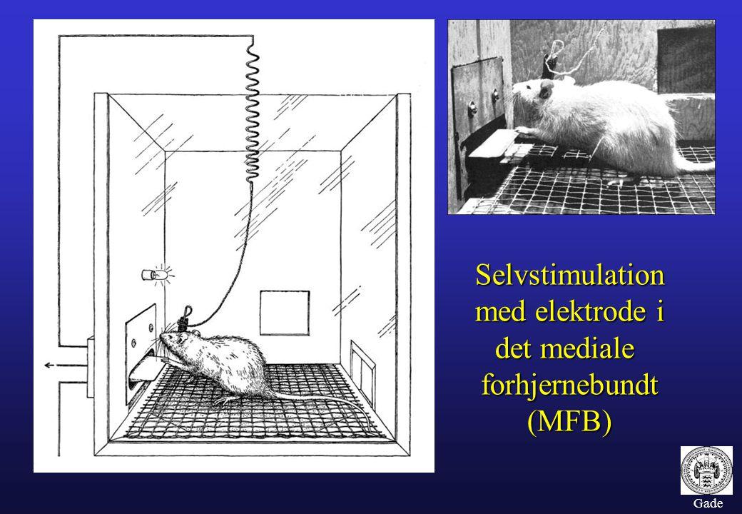Selvstimulation med elektrode i det mediale forhjernebundt (MFB)