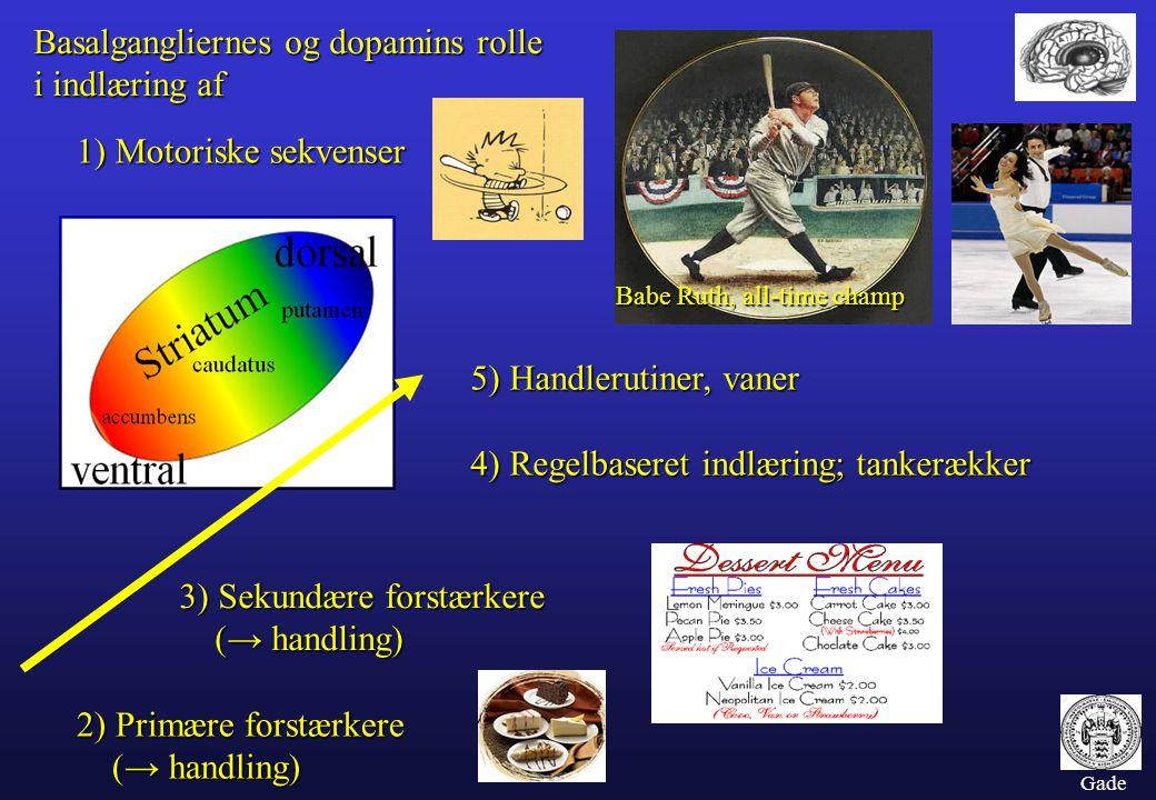 Basalgangliernes og dopamins rolle i indlæring af