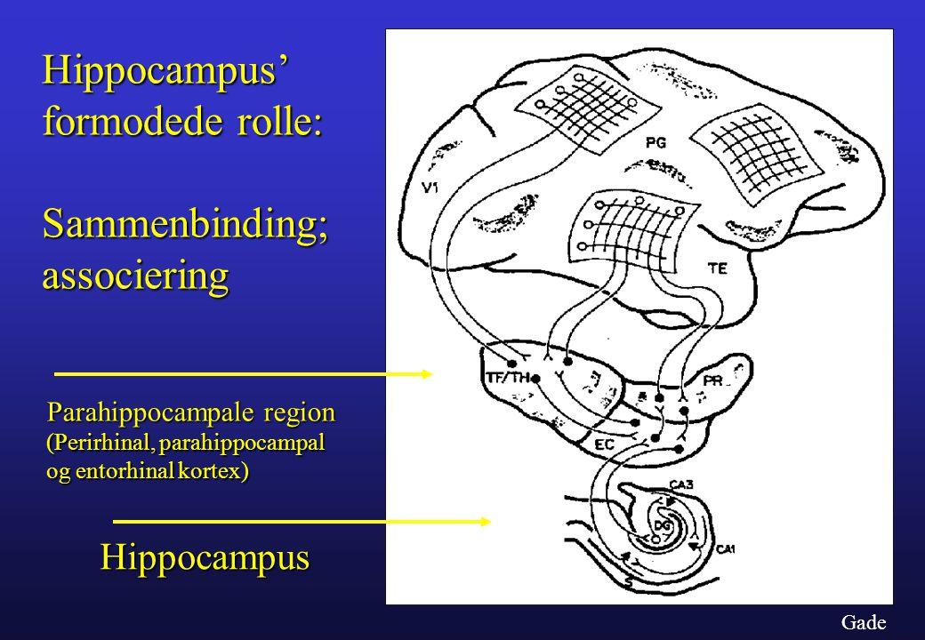 Hippocampus' formodede rolle: Sammenbinding; associering Hippocampus