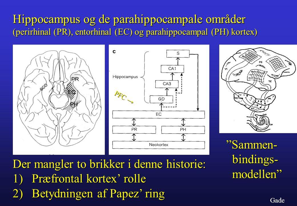Hippocampus og de parahippocampale områder