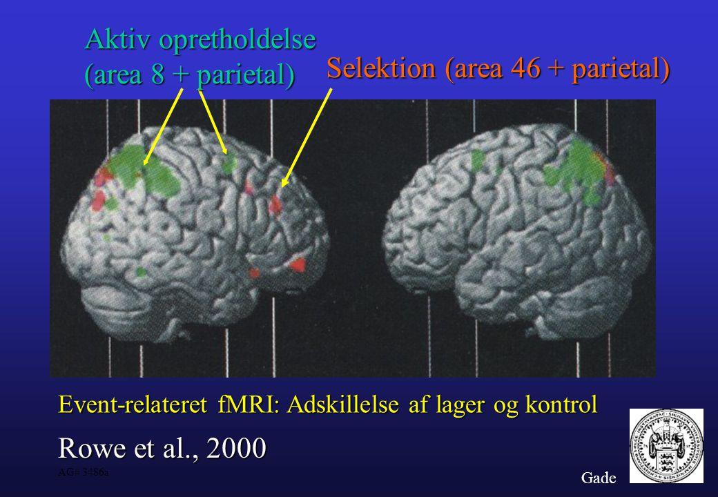 Selektion (area 46 + parietal)