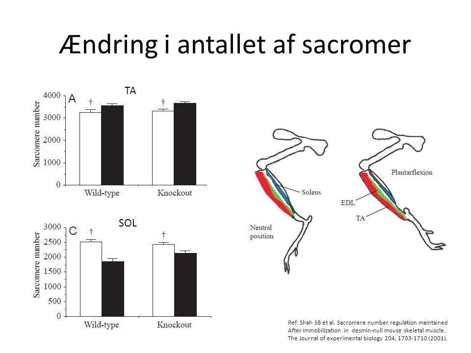 Ændring i antallet af sacromer