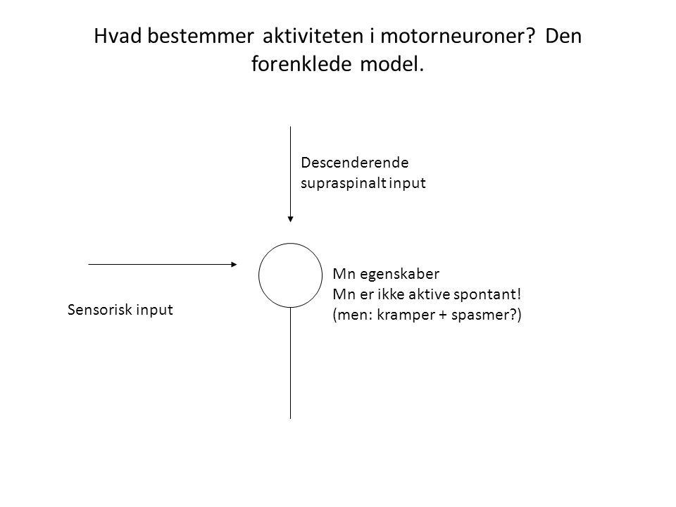 Hvad bestemmer aktiviteten i motorneuroner Den forenklede model.