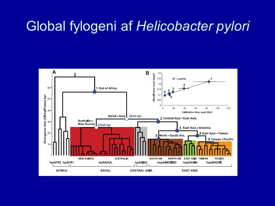 Global fylogeni af Helicobacter pylori