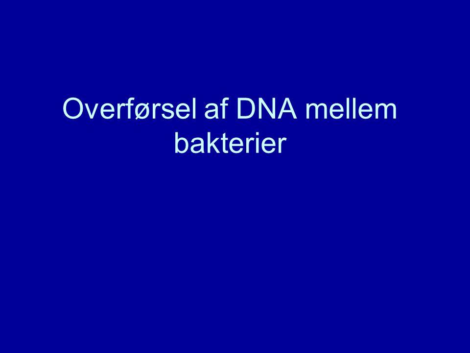 Overførsel af DNA mellem bakterier