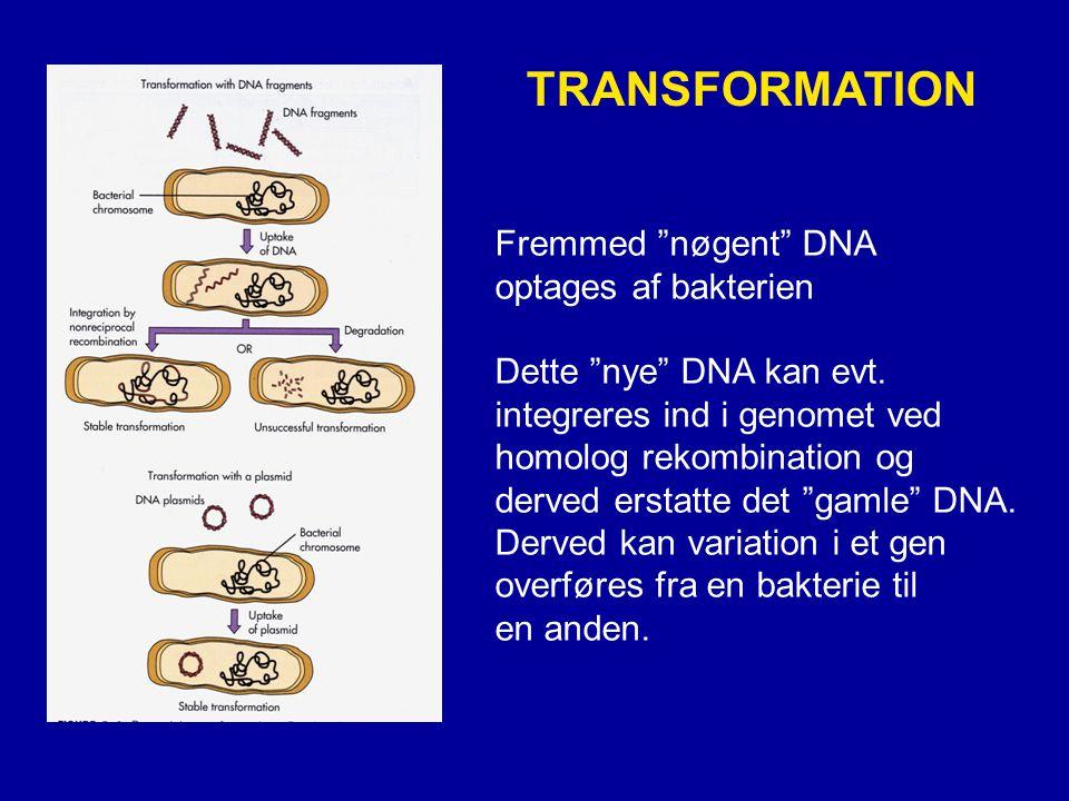 TRANSFORMATION Fremmed nøgent DNA optages af bakterien