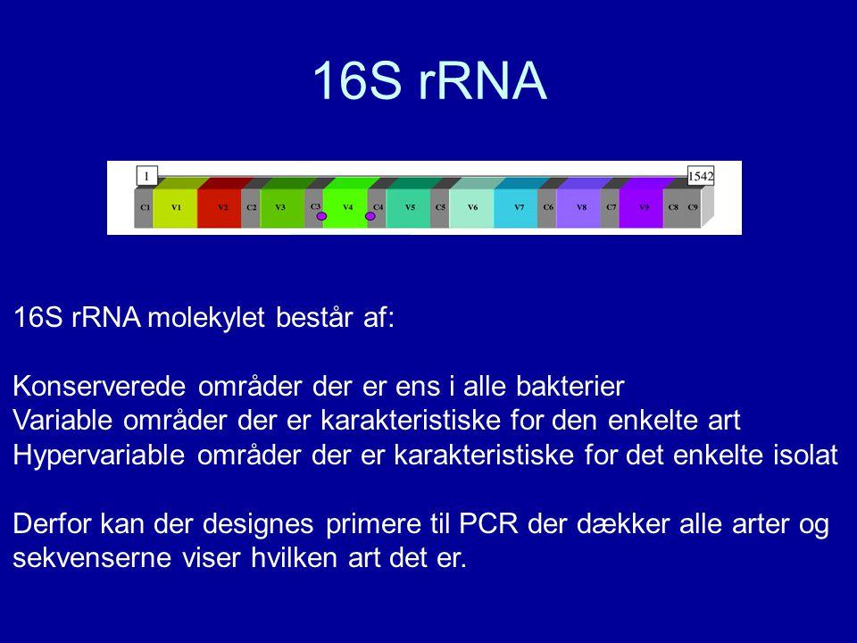 16S rRNA 16S rRNA molekylet består af: