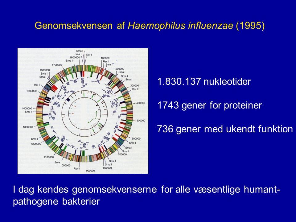 Genomsekvensen af Haemophilus influenzae (1995)