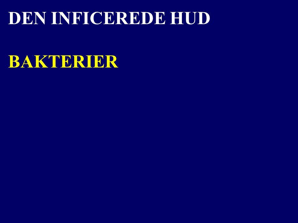 DEN INFICEREDE HUD BAKTERIER