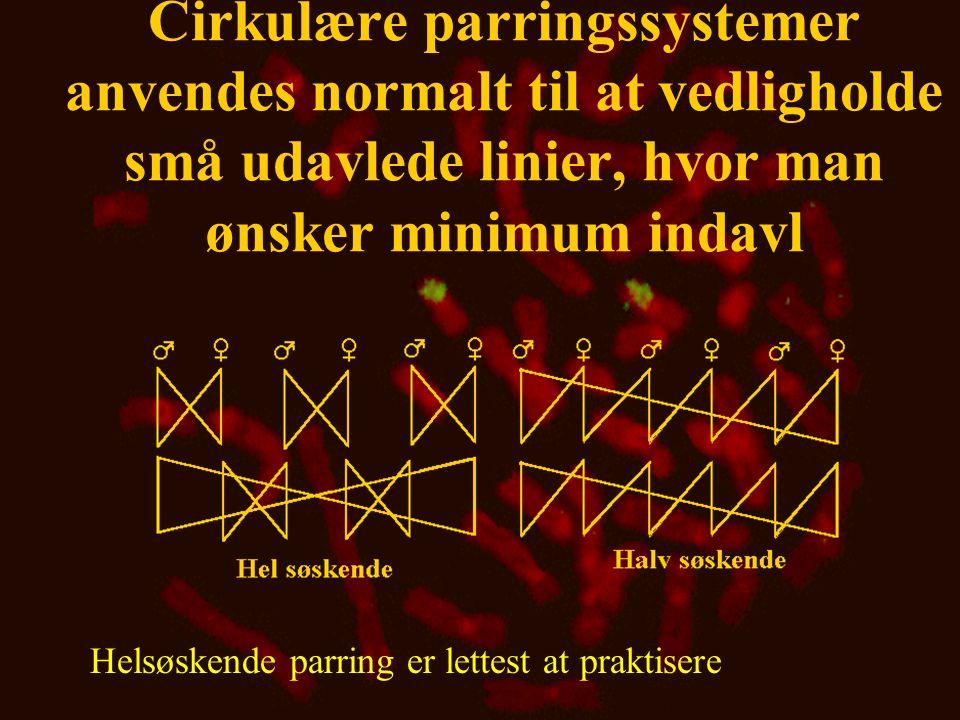 Cirkulære parringssystemer anvendes normalt til at vedligholde små udavlede linier, hvor man ønsker minimum indavl