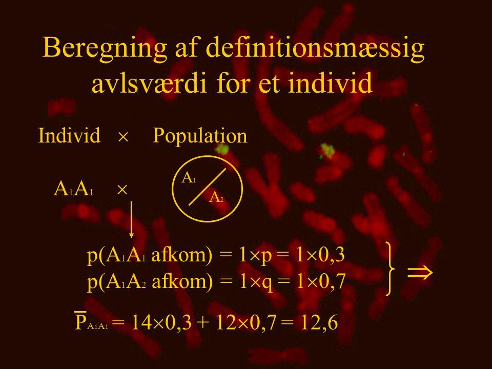 Beregning af definitionsmæssig avlsværdi for et individ