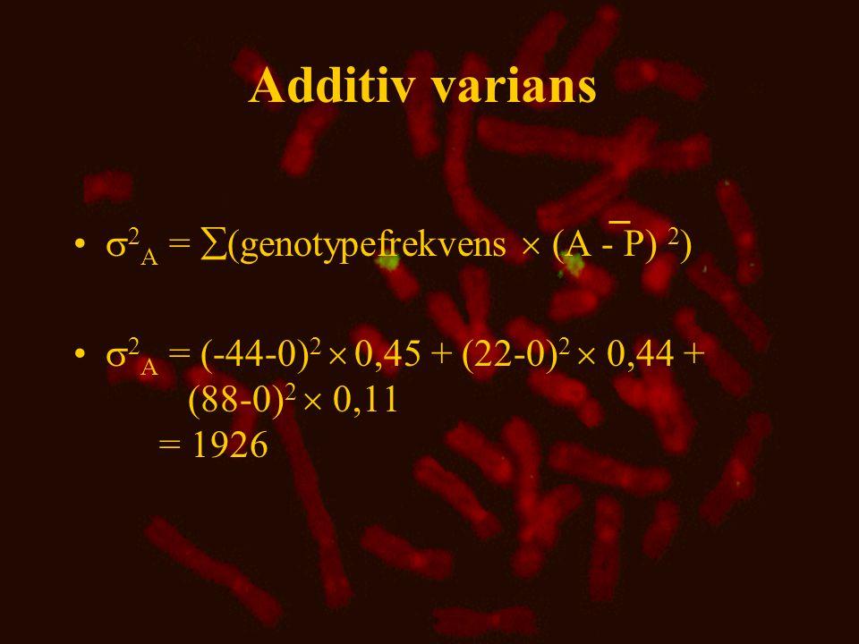 Additiv varians 2A = (genotypefrekvens  (A - P) 2)