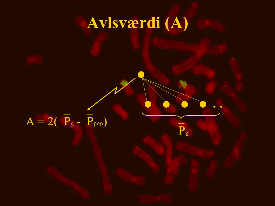 Avlsværdi (A) A = 2(`Pg -`Ppop) `Pg