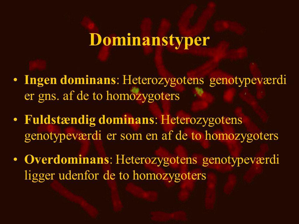 Dominanstyper Ingen dominans: Heterozygotens genotypeværdi er gns. af de to homozygoters.