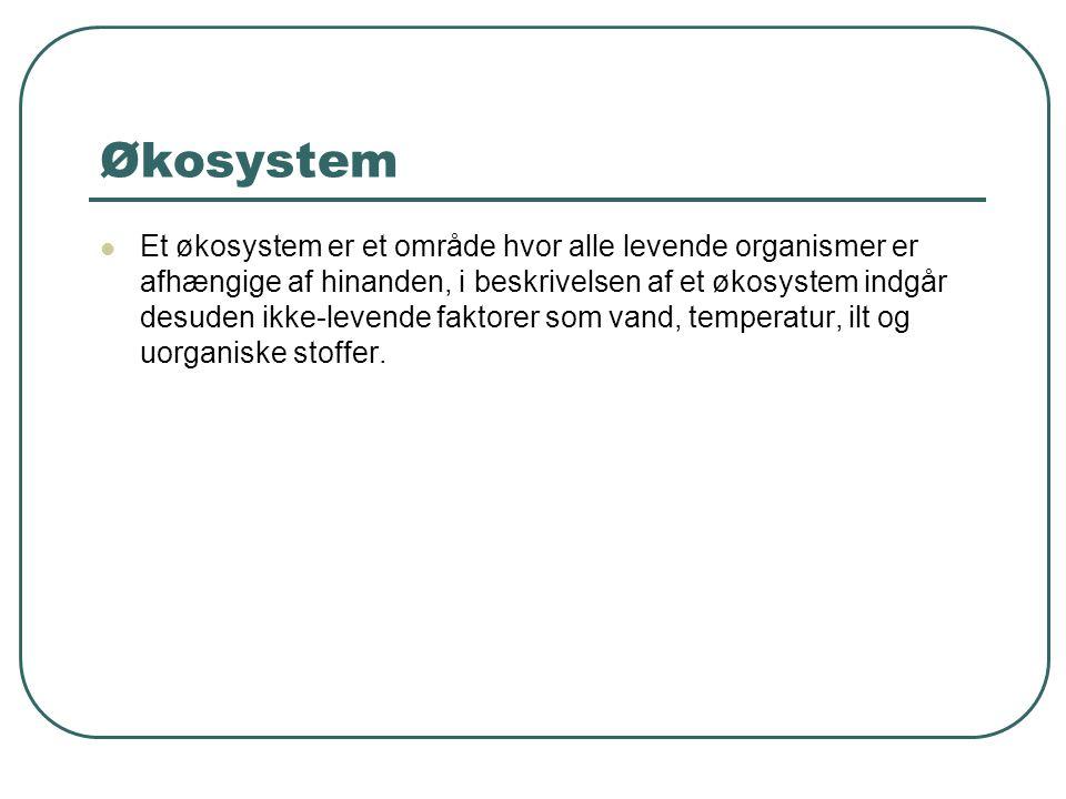 Økosystem