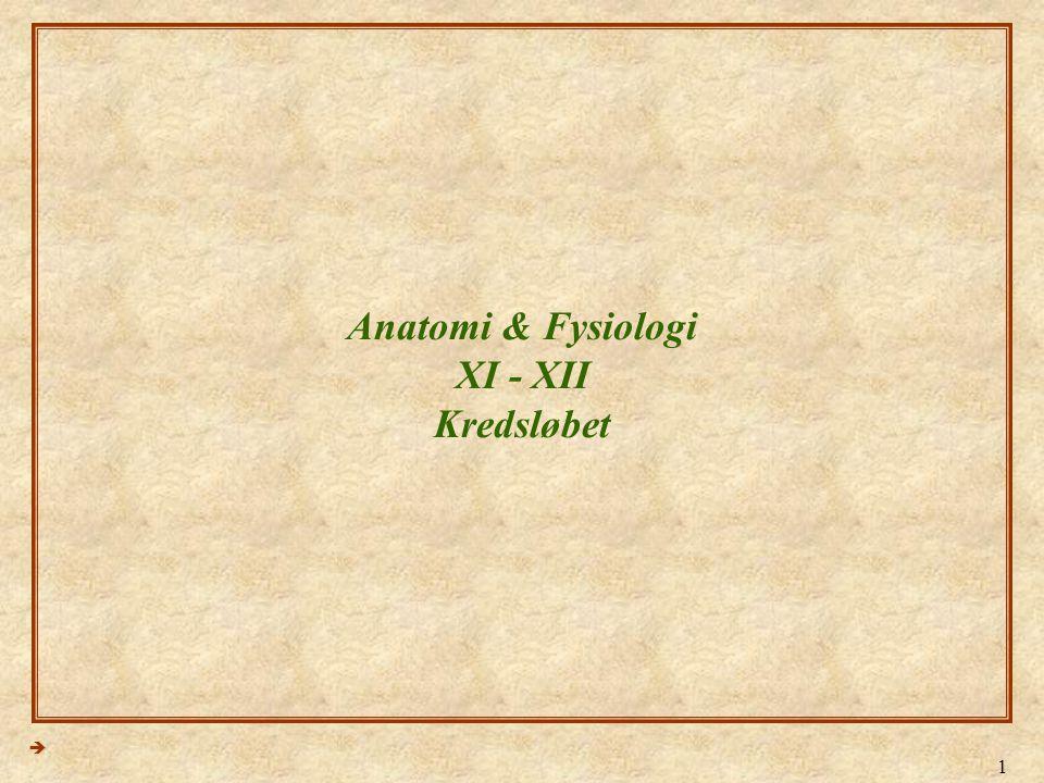 Anatomi & Fysiologi XI - XII Kredsløbet
