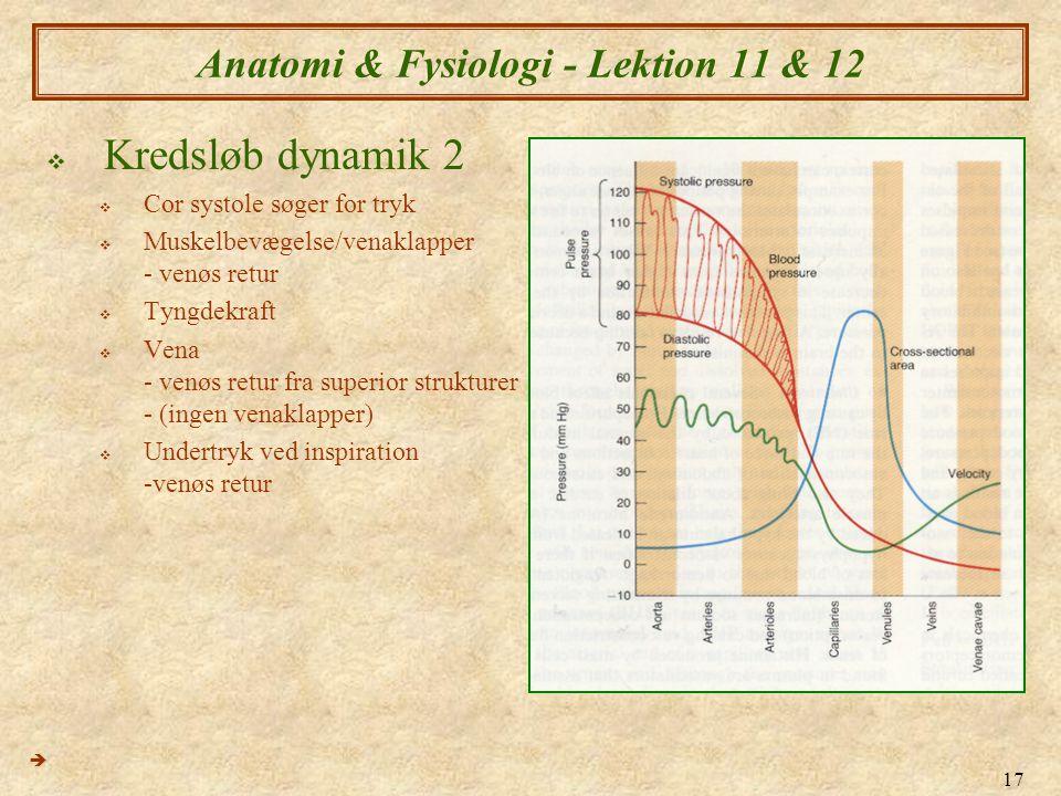 Anatomi & Fysiologi - Lektion 11 & 12