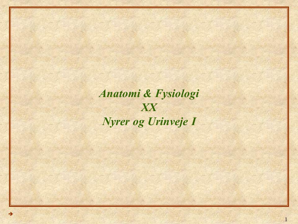 Anatomi & Fysiologi XX Nyrer og Urinveje I